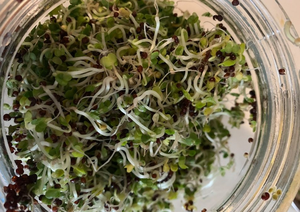 Growing Your Own Broccoli Sprouts: They're Great to Cultivate!